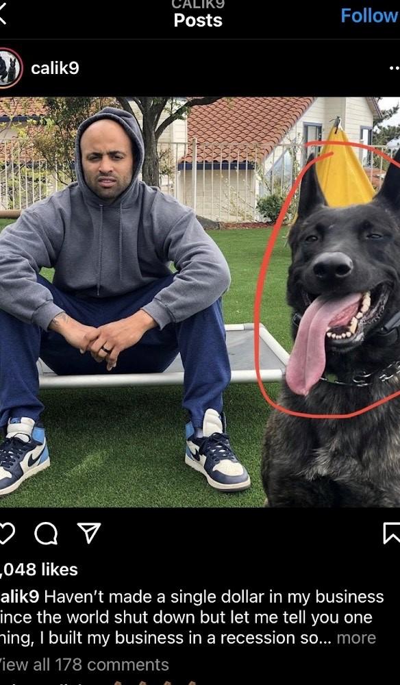éducation de chien
